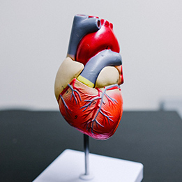 Cardiologia e cardiochirurgia